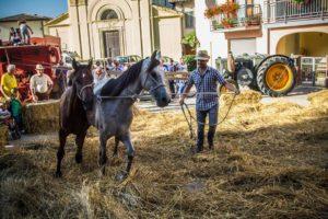 trita_cavalli